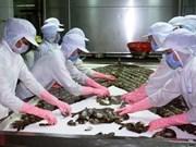 UE apoya el desarrollo de cadenas de valor de camarones en Vietnam