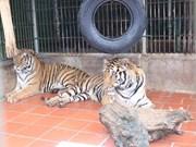ONU resalta esfuerzos vietnamitas contra crímenes relacionados con animales salvajes