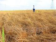 Budistas apoyan a víctimas de sequía en Ninh Thuan