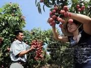Empresa vietnamita exporta más de una tonelada de lichis a Estados Unidos