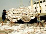 Exportaciones de arroz vietnamita anticipan 400 mil toneladas en mayo
