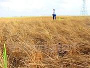 Banco Mundial ayuda a Vietnam elevar resistencia ante cambio climático