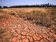 Delta del Mekong sufre pérdida de más de 215 millones de dólares por sequía