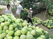Casi dos mil comunas vietnamitas cumplen estándares de nuevo campo