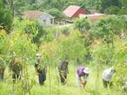 Provincia vietnamita anuncia Plan de Acción contra degradación forestal