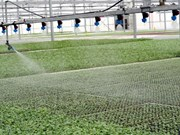 Asistencia israelí a provincia centrovietnamita en agricultura