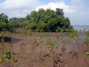 Despliegan proyecto de reforestación de manglares en Vietnam