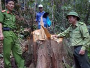 Cierre de bosques naturales en altiplanicie occidental de Vietnam