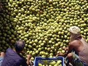 Vietnam exporta mangos de alta calidad a Australia