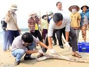 Negligencia ambiental de empresa taiwanesa Formosa preocupa a diputados vietnamitas