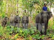 Vietnam lanza Semana de protección de elefantes