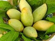 Mango fresco de Vietnam podrá penetrar en mercado estadounidense