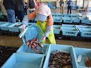 Exportadores de mariscos de Japón entran en mercado vietnamita