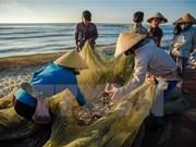 Afectados por la muerte masiva de peces recibirán compensaciones en Vietnam