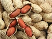 Vietnam suspende la importación de cacahuates de Sudán y Hong Kong