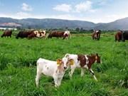Vietnam y Países Bajos cooperan en desarrollo agrícola
