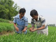 Promueven en localidades vietnamitas economía verde