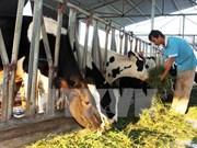 Aceleran en Vietnam la reestructuración agrícola y el desarrollo rural