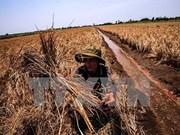 UNICEF ayudará a afectados por sequía y salinización en Vietnam