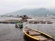 Da Nang se empeña en convertirse en mayor centro de pesca de Vietnam