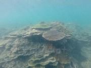 Belleza de la zona de reserva marina de Hon Cau