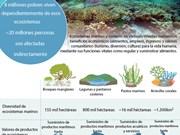 [Infografia] Ecosistemas marinos y costeros en Vietnam