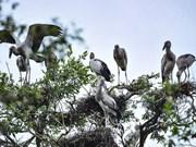 [Fotos] Raras especies de aves en parque nacional de Tram Chim