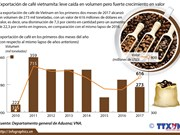 Fuerte crecimiento del valor de exportación de café vietnamita