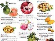 [Infografia] Especialidades fruteras de Vietnam