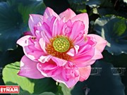 Ninh Xa, destino apacible para disfrutar el verano