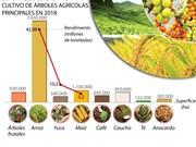 El cultivo de Vietnam por ingresar fondo multimillonario en 2018 por exportaciones