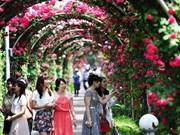 Rosas de Bulgaria embellecerán a capital de Vietnam