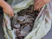 Aduana de Ciudad Ho Chi Minh decomisa 3,3 toneladas de escamas de pangolín