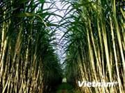 Tailandia reducirá 500 mil toneladas de azúcar de exportación