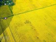 [Video] Agricultura de Vietnam se propone elevar el valor de las exportaciones a más de 40 mil millones USD
