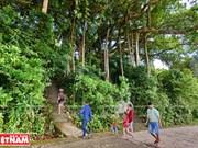 [Foto] El antiguo baniano del bosque de Son Tra