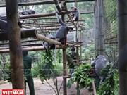 [Foto] Protección de animales silvestres en Vietnam