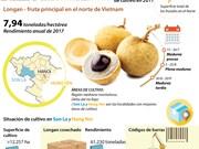[Infografía] Buena cosecha de longan en el norte de Vietnam