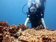 (Video) Impresionante arco de piedra bajo agua atrae a los visitantes a Ly Son