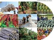 [Infografía] Exportaciones agrícolas de Vietnam crecen en 9,3 por ciento