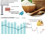 (Info) Exportaciones arroceras podrían alcanzar tres mil millones de dólares este año