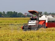 Agricultores vietnamitas se esfuerzan por enfrentar al cambio climático