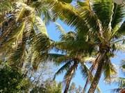 Los cocoteros en la isla Nam Yet, símbolo de la voluntad de soldados vietnamitas