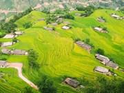 (Televisión) Hoang Su Phi: atractivo destino turístico en la región noroeste de Vietnam