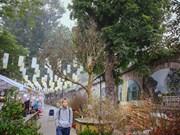 (Foto) Embellecen flores de albaricoque mercados en Hanoi en vísperas del Tet