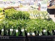 Interesada prensa internacional en uso de hojas de plátano en supermercados vietnamitas