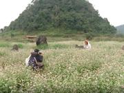 (Televisión) Atrae Meseta Rocosa de Dong Van turistas a provincia de Ha Giang
