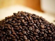 (Televisión) Sector cafetero vietnamita busca aumentar el valor agregado de productos