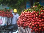 (Televisión) Japón abre oficialmente las puertas a lichi vietnamita