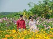 (Video) Aldea de flores Tay Tuu-  un colorido destino turístico en Hanoi